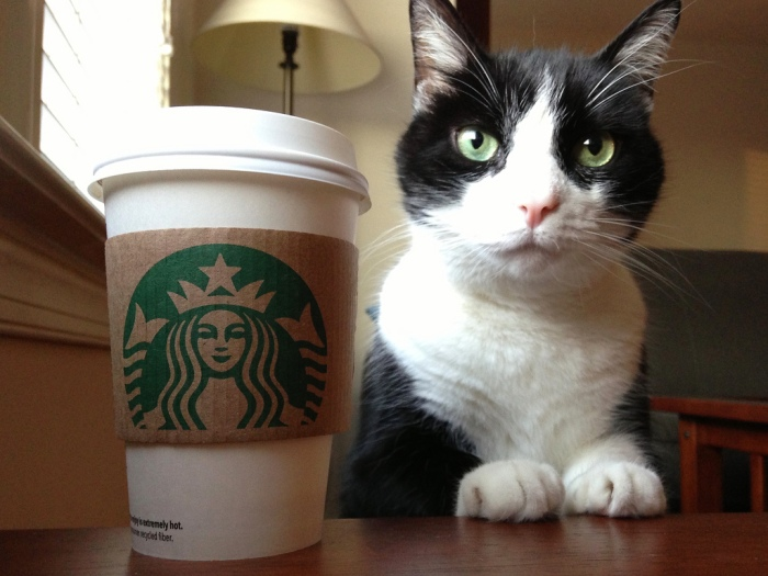White and black cat sitting next to a cup of coffee